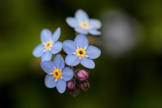 spring-flowers12