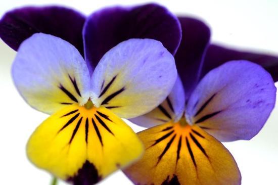 spring-flowers15