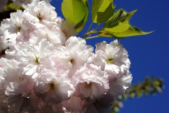 spring-flowers8
