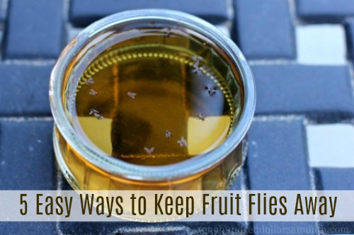 how to get rid of fruit flies Archives - One Hundred Dollars