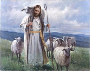shepherd3