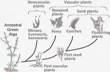 Biology Diva / Chapter 24