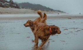 Pacific Ocean Cannon Beach Dogs