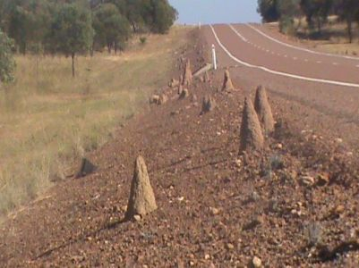 Termite mounds in all shapes and sizes.