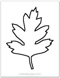 leaf outline template hawthorn outlines printable options little