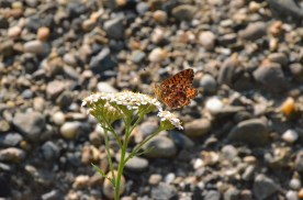 Better shot of the butterfly (there were many, so maybe not the same one. :))