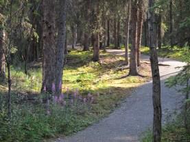 Meandering path, feels like a garden.