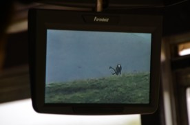 Great use of the digital camera, everyone gets a look even if they don't have binoculars.