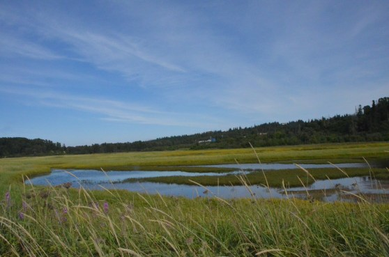Wetlands along the northwest shore of Kenai Peninsula