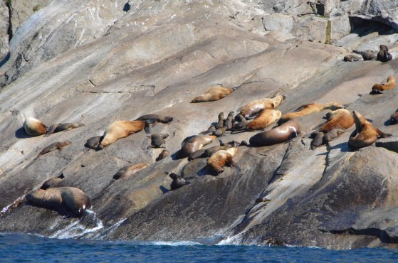 A sea lion pupping area. University of Alaska maintains several cameras and sensor packages here.
