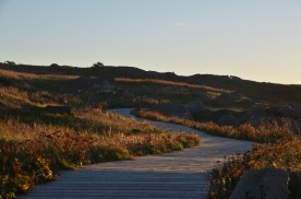 CapeSpear_022