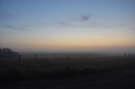 Morning fog in the grassland