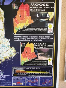 Moose and Deer collision statistics