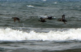 Birds flying low over the waves.