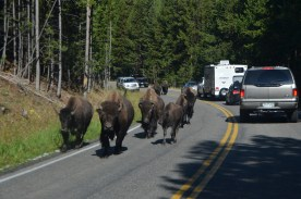 Ranger using his truck's public address to make just enough clicking and static that the herd decides to trot on down the open lane.