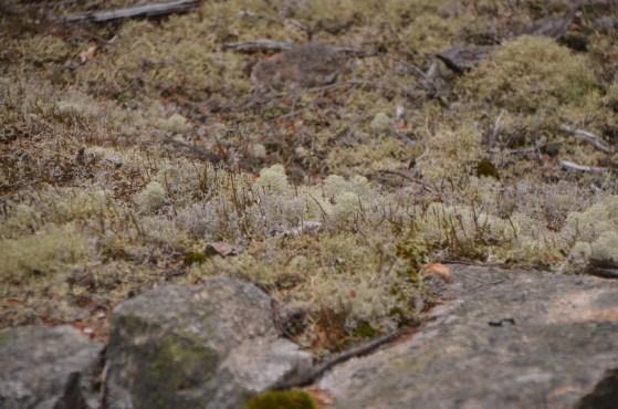 Lichens were abundant and quite diverse.