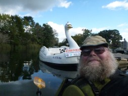 Crystal river swan boat.