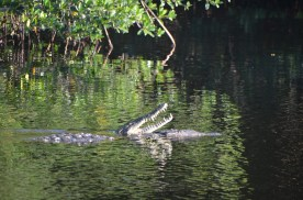 And some pushing and the male swims away.