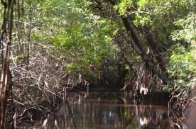 Everglades_057