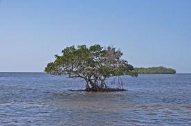 Everglades_080