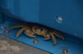 Crab in the porta potty.