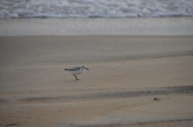 Watched a couple of shore birds for a while.
