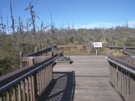 Just outside the visitor center the walk starts with a larger open deck.