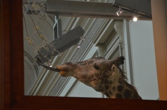 See the giraffe through the window.