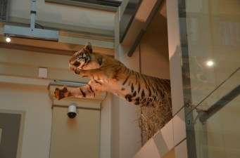 Look up as you walk into the hall of mammals. Pause and let your kids discover it themselves.