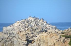 Monterey_027