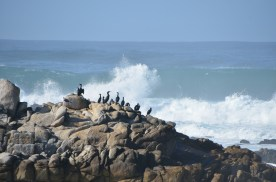 Monterey_030