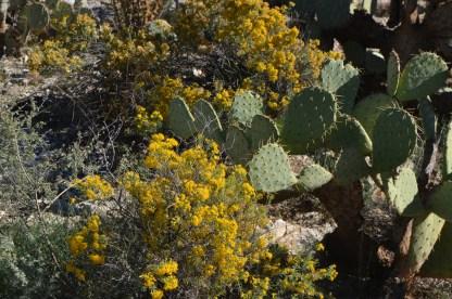 Saguaro_015
