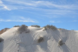 A dune beside the road. The sun was just at the right height for these plants to cast their shadow down the slope. Notice breaks in the smooth surface where the sand has broken loose and slid away.
