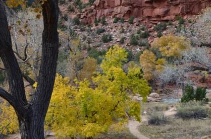 Last of the fall foliage