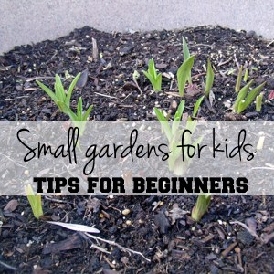 Small gardens for kids: tips for beginners