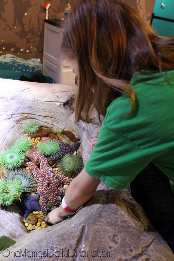touch tank at SEA LIFE Grapevine