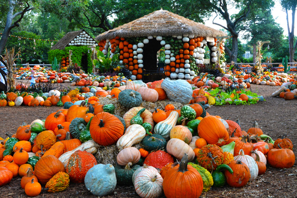 Autumn at the Arboretum | Dallas fall festival