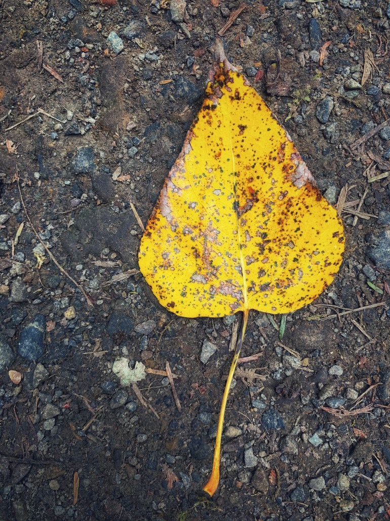 """""""The dust was antique spice, burnt maple leaves, a prickling blue that teemed and sifted to earth. Swarming its own shadows, the dust filtered over the tents."""" ― Ray Bradbury, Something Wicked This Way Comes"""