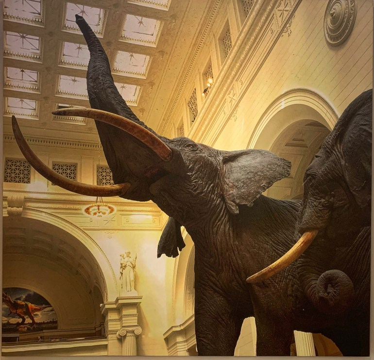 A Morning Well Spent at the Field Museum in Chicago