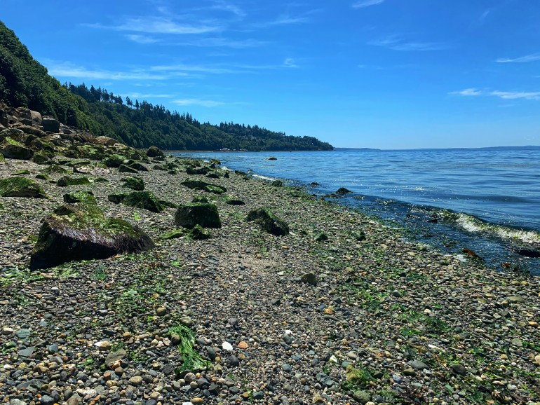 A Summer Afternoon at Mukilteo Beach in Washington State