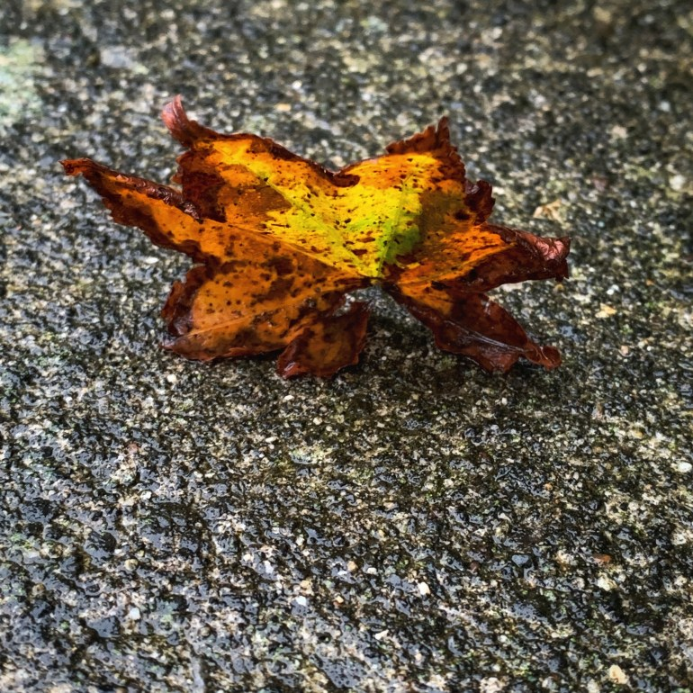 """""""It looked like the world was covered in a cobbler crust of brown sugar and cinnamon."""" ― Sarah Addison Allen, First Frost"""