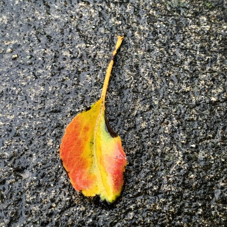 """""""Autumn seemed to arrive suddenly that year. The morning of the first September was crisp and golden as an apple."""" ― J.K. Rowling, Harry Potter and the Deathly Hallows"""
