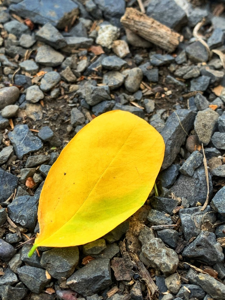 """""""Leaves covered pavement like soggy cereal."""" ― Patricia Cornwell, The Body Farm"""
