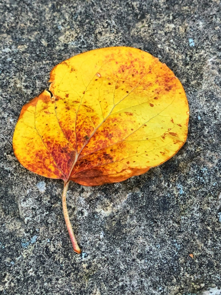 """""""How indescribable the scent of autumn flowers was– barely a scent at all, really; just a faint, strange smell, pleasant but sad. Could a smell be sad or was it just the association with the dying summer?"""" ― Dodie Smith, The New Moon With the Old"""
