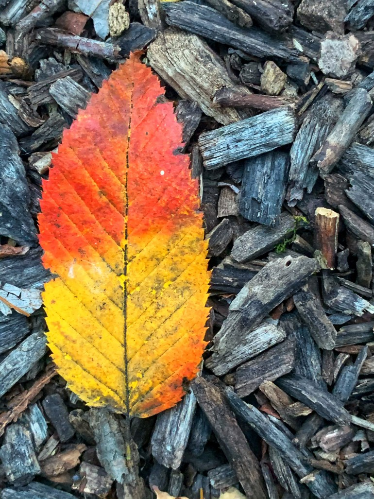 """""""Sometimes I'm the winter tree and most of these times, a gathering of autumn leaves."""" ― Goitsemang Mvula"""