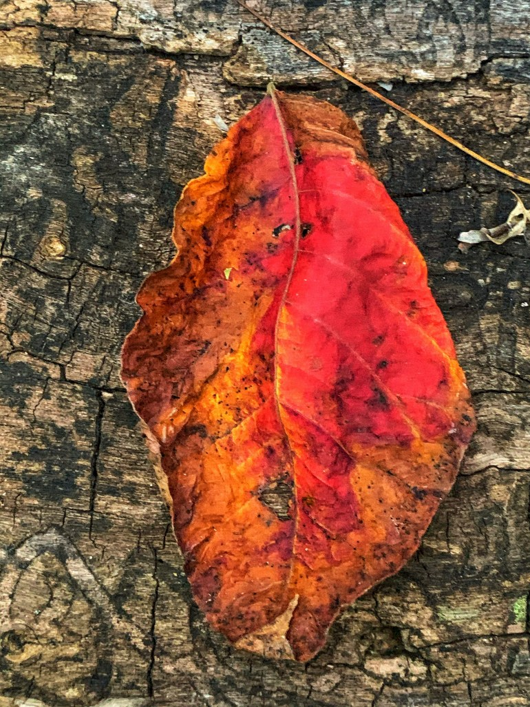 """""""Does the first slanting ray of light; not lie? Catapulted from the arching mountains, into a small stinking dungeon, peeking through the curtains; humming lies. Lies land on the ears like an autumn leaf- falling every so gently to no breeze of the dawn."""" ― Teufel Damon"""