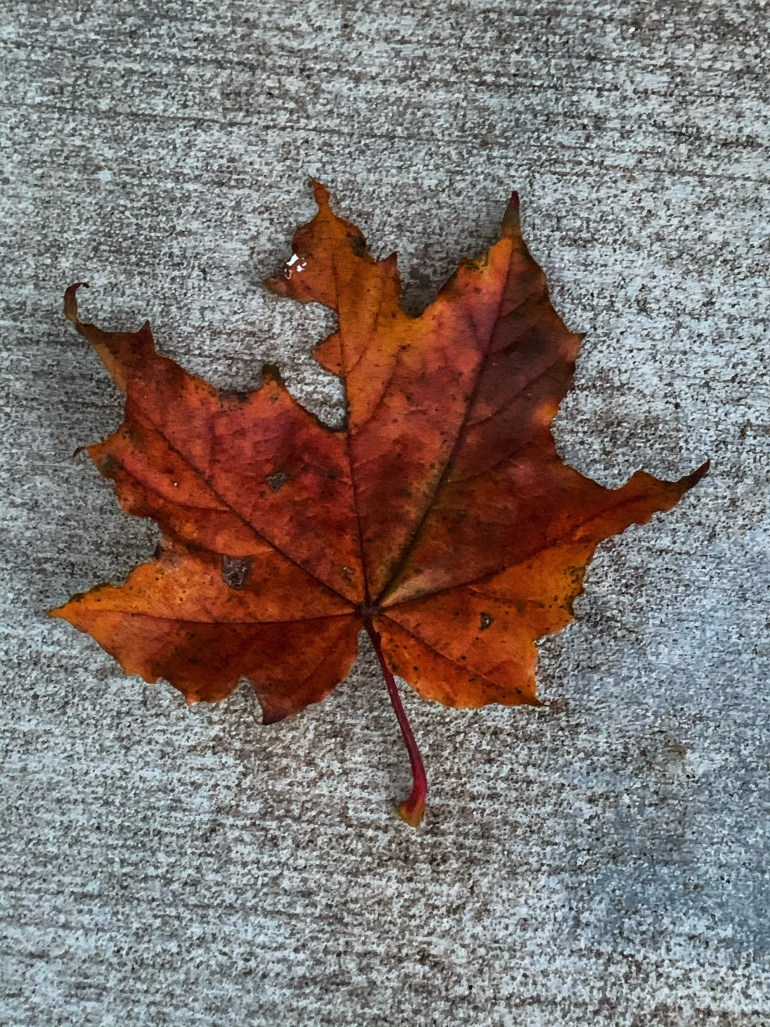 """""""Autumn has arrived. I hear it in the whispering of leaves."""" ― Anujj Elviis"""
