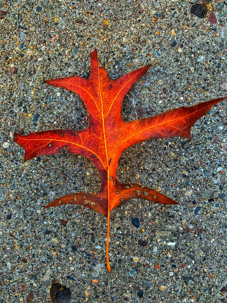 """""""Great artists come and go; they are born and they die; but there is one exception who has been living for thousands of years and still continues creating new works, new beauties every year: The Autumn!"""" ― Mehmet Murat ildan"""