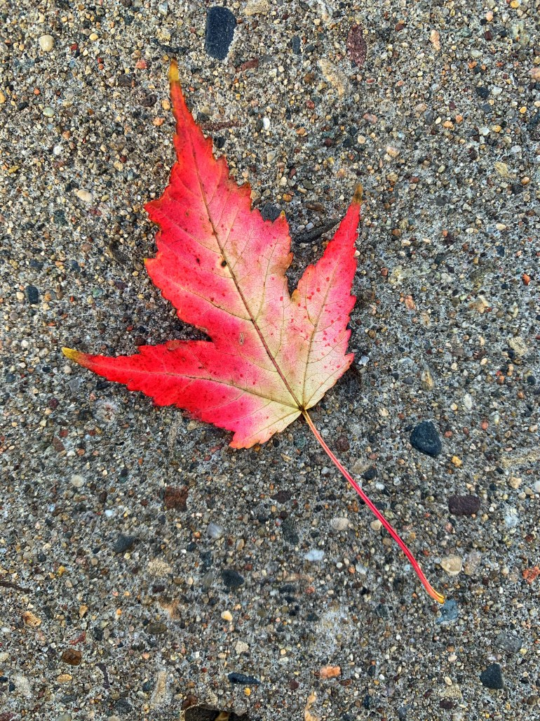 """""""Autumn has come to northeast Montana. The vapor of one's breath, the clarity of the stars, the smell of wood smoke, the stones underfoot that even a full day of sunlight won't warm- these all say there will be no more days that can be mistaken for summer."""" ― Larry Watson, Let Him Go"""