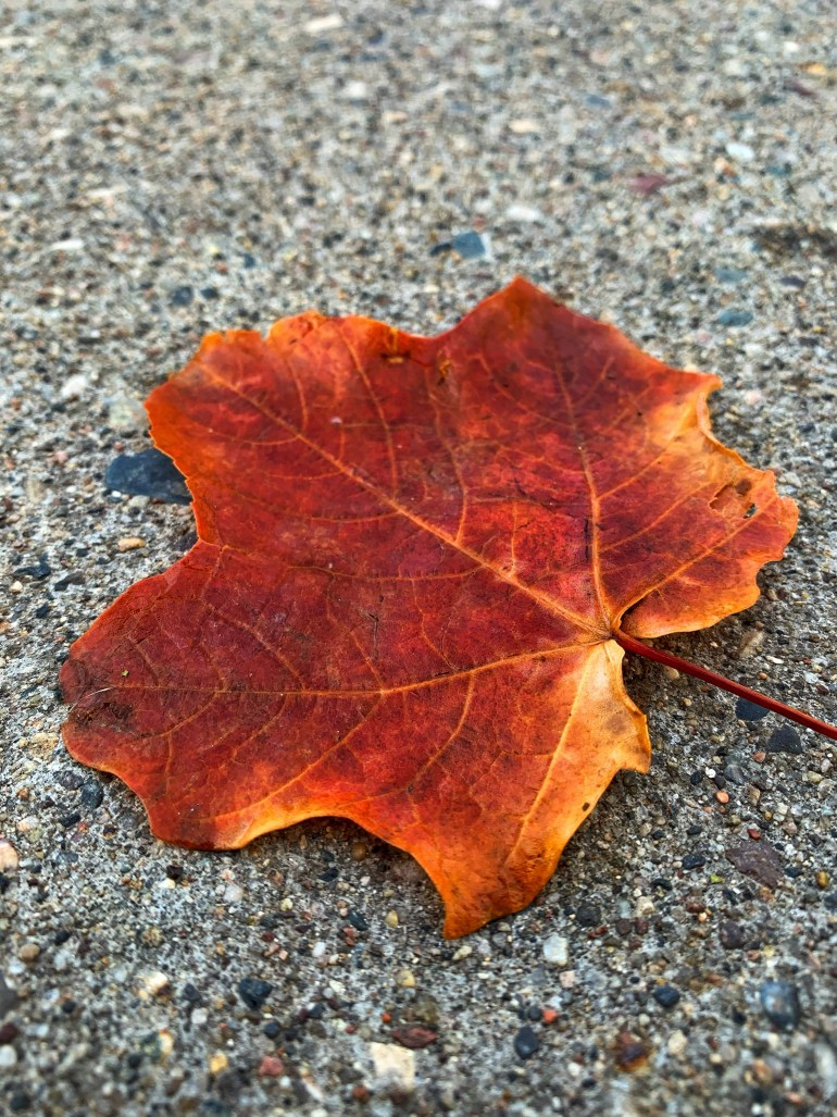 """""""The smell of burning firewood and the molding of organic, earthy substances reminded her of jumping wildly into the enormous leaf piles of autumns past and she suddenly wished that it was appropriate for someone her age to do such a thing."""" ― Abby Slovin, Letters In Cardboard Boxes"""